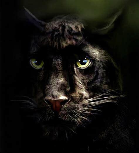 Pintar a los felinos : gatos, panteras, tigres y leones ...