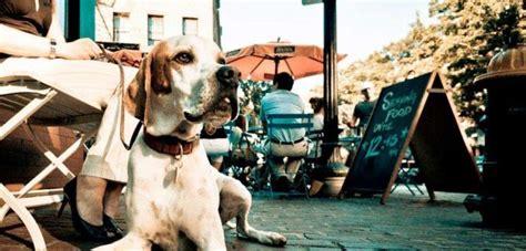 legge sull ingresso dei cani nei luoghi pubblici cani negli esercizi pubblici una consuetudine potrebbe