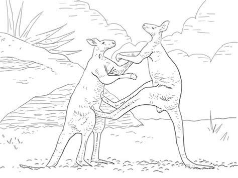 fighting red kangaroos coloring page  printable