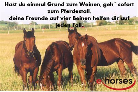 stimmt oder sprueche mit pferden