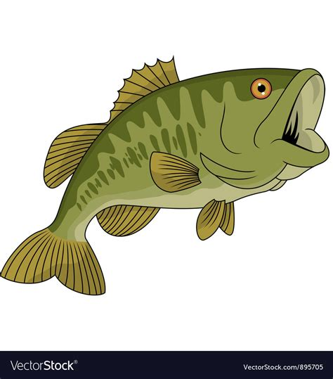 Images Of Bass Fish Bass Fish Royalty Free Vector Image Vectorstock
