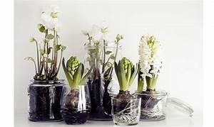 Come far crescere i bulbi in acqua CASAfacile