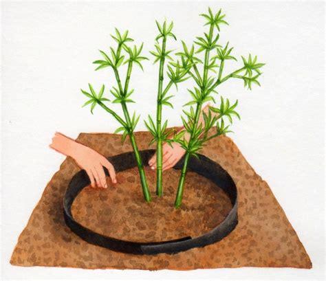 planter des bambous en pot 28 images comment planter des bambous dans jardin les 25