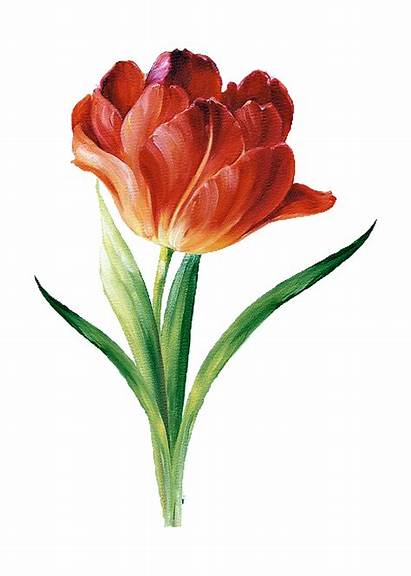 Flower Pencil Colored Drawings Lisa Painting Flowers