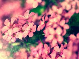 Tiny Pink Flowers, Small Flowers Blooming, Green Leaves ...