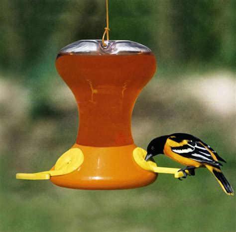 baltimore orioles feeders baltimore orioles bird feeder birdcage design ideas