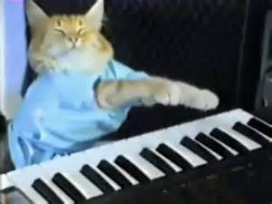 cat keyboard the paw keyboard cat the