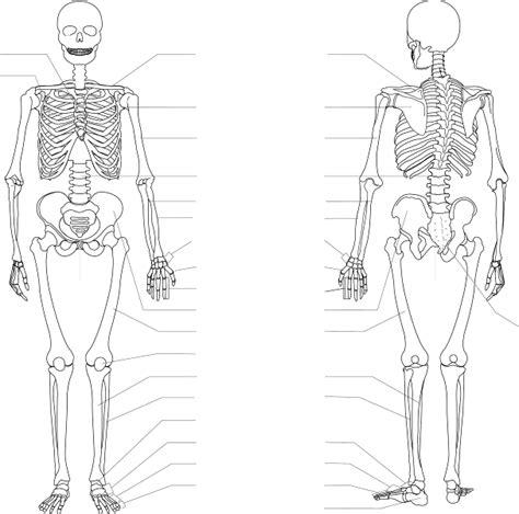 axial skeleton labeling worksheet free worksheets library