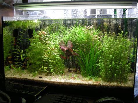 mon aquarium 60l cr 233 ation d aquarium eau douce aqua