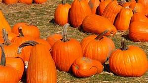 Protect, Your, Pumpkin, Patch, From, Pest, Birds