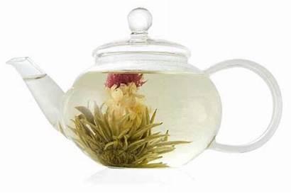 Tea Flowering Teapot Jasmine Blooming Teas Exotic