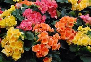 Blumen Für Sonnigen Standort : blumen f r blumenk sten archives seite 3 von 10 balkon ~ Michelbontemps.com Haus und Dekorationen