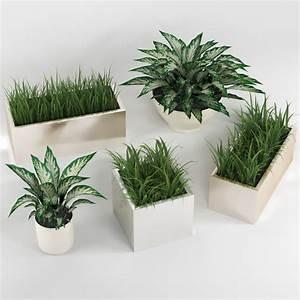 Indoor, Plants