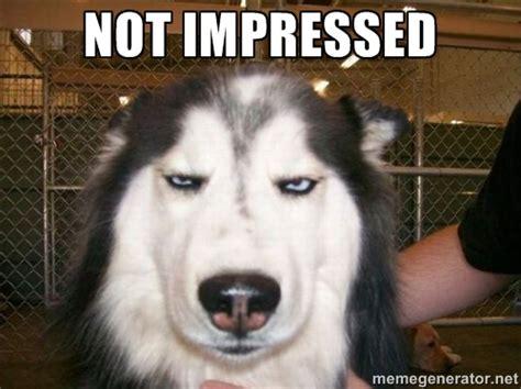 Not Impressed Meme Unimpressed Meme Generator Image Memes At Relatably