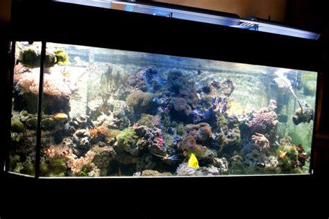 aquarium d eau de mer aquarium d eau de mer 450 l