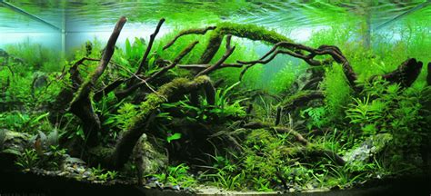 Best Substrate For Aquascaping by A Guide To Aquascaping The Planted Aquarium