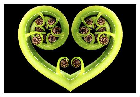Koru Heart: Card - Wayfarer Images