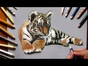 Realistic Tiger Cub Drawings