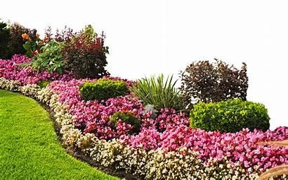 Garden Landscape Plants Flower Background Landscaping Gardening