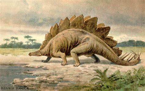 Stegosaurus Drawing By Heinrich Harder