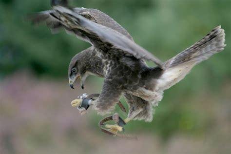 birds wear feathers   fur wonderopolis