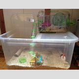 Robo Dwarf Hamster Cages | 500 x 383 jpeg 29kB