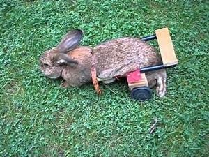 Kaninchenkäfig Für 2 Kaninchen : rollwagen f r kaninchen gebaut version 2 macht et euch halt selba youtube ~ Frokenaadalensverden.com Haus und Dekorationen