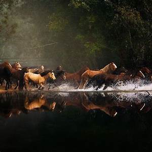 26 best images about Horses Running Through Water on ...