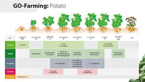 global crop improvement company potato