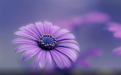 Purple Blue Flower Hd Wallpapers For Mobile Phones And