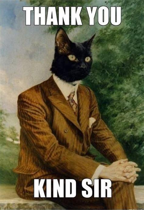 Thank You Cat Meme - cat memes funny and cute kitten memes