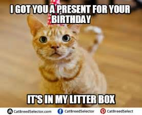 birthday cat meme happy birthday cat pictures to pin on pinsdaddy