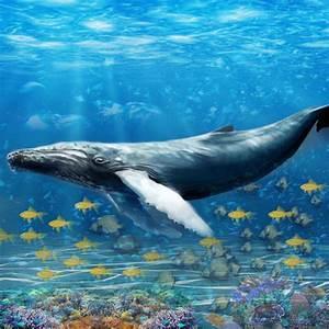 Baleine Bleue Dfi De Survie Par Waqas Akram