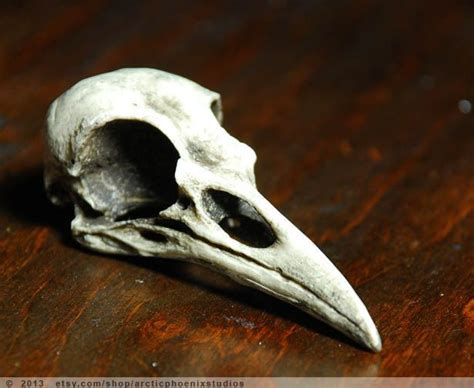 Crow Bird Skull Resin Plastic Replica Corvus