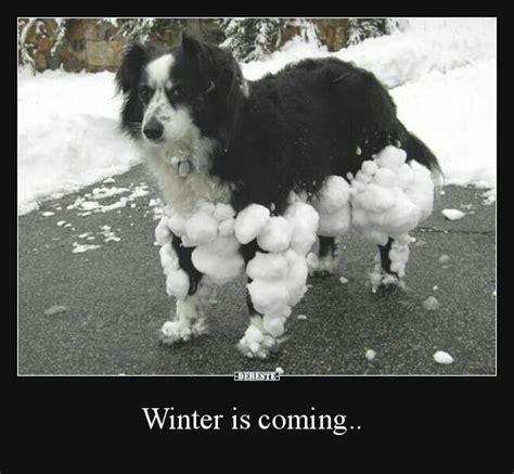 lustige winter bilder winter is coming lustige bilder spr 252 che witze echt lustig hunde lustige tierbilder