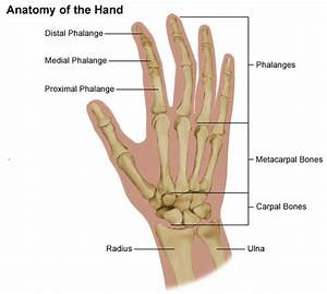 Hand Pain And Problems