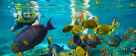 rainbow reef snorkeling aulani hawaii resort spa