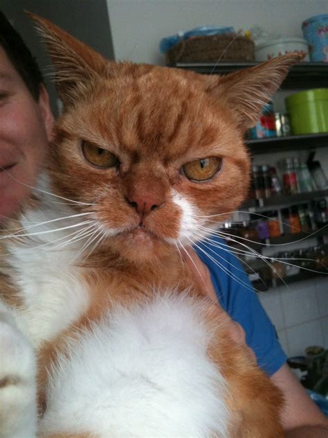 grumpy cats meet furbyin funny cats