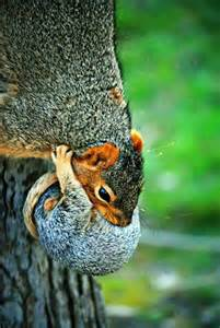 Squirrel Babies with Mother
