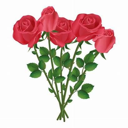 Bouquet Roses Vector Bunch Clip Celebration Birthday
