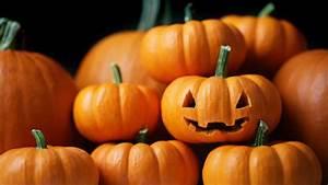 Small, Pumpkins, U2013, Bing, Wallpaper, Download