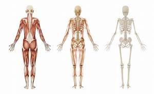 Anatomie těla svaly