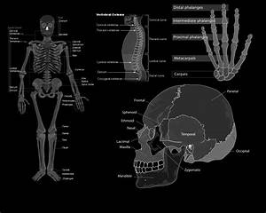 Anatomy Wallpaper and Background | 1280x1024 | ID:208422