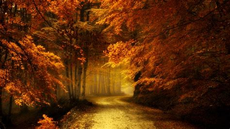 autumn forest road  ultrahd wallpaper wallpaper studio