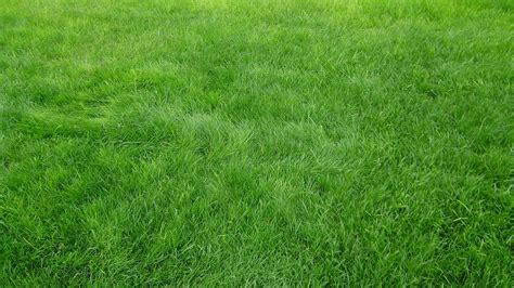Grass Background Hd Wallpaper