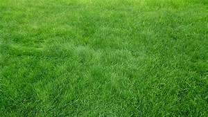 Grass Background HD wallpaper | 2048x1152 | #30459