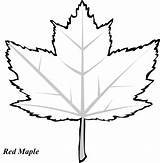Maple Leaves Coloring Leaf Trace Drawing Oak Pages Pattern Printable Clipart Tracers Fall Printout Clip Clipartpanda Designs Graphic Clipartbest Cliparts sketch template