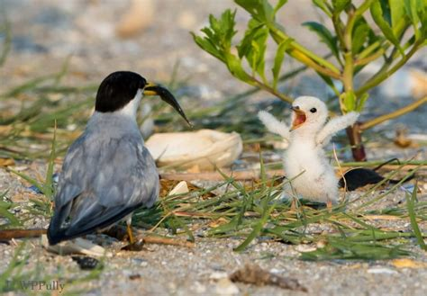 baby birds 17 best images about birds butterflies flowers animals on pinterest herons robins and mice