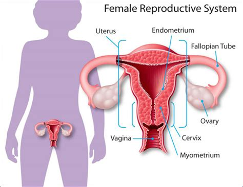 ovarian cysts womenshealthgov