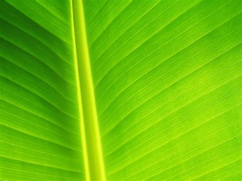 Abstract Green Leaf Wallpaper by Wallpapers Green Leaf Wallpapers